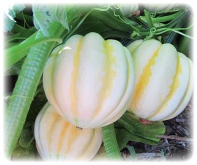 Live Oak Canyon Pumpkin Patch - Farm - Foursquare