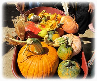 Live oak canyon pumpkin patch 2015 pittsboro