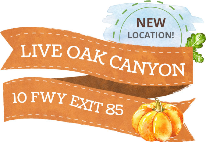 homepage-location-liveoak