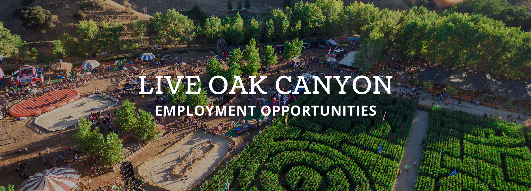 Employment-Opportunities-LiveOak