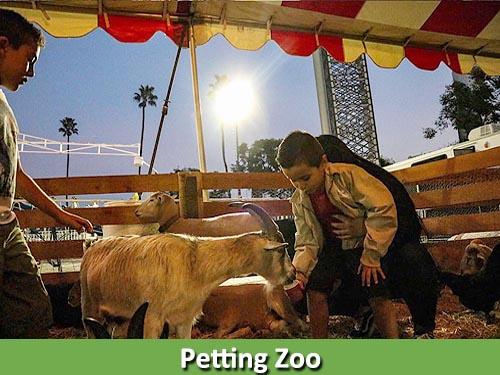 Petting Zoo 500