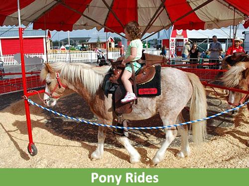 Pony rides500